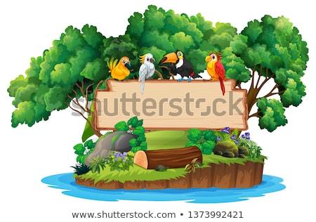 птиц джунгли фоторамка иллюстрация лес дизайна Сток-фото © bluering