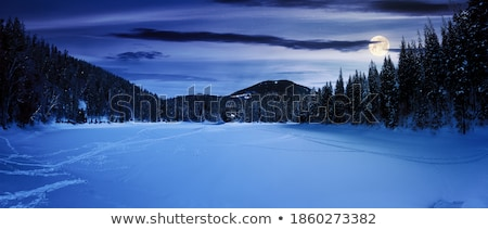 mistig · bos · landschap · witte · bomen · achtergrond - stockfoto © bluering