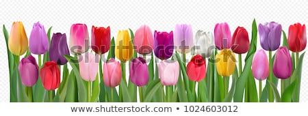 photo with flowers transparent background stock photo © cammep