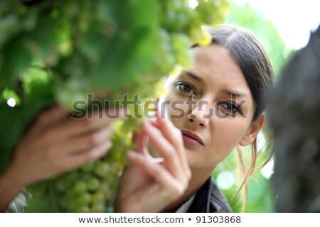 Winemaker inspecting grapes stock photo © lichtmeister