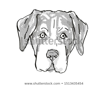 Entlebucher Mountain Dog Dog Breed Cartoon Retro Drawing Stock photo © patrimonio