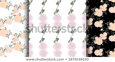 Vector ornament abstract gekleurd Stockfoto © wywenka