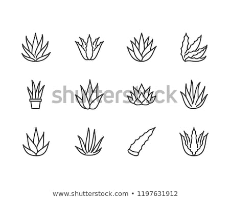 Healthy Organic Cosmetics Vector Thin Line Icon Stock photo © pikepicture