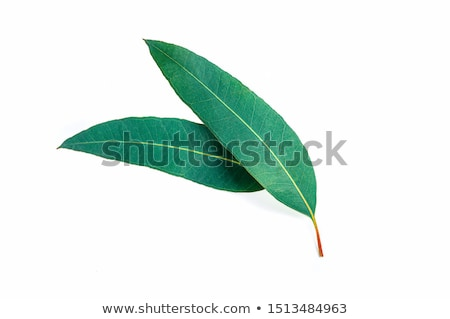 Naturalismo sempre-viva folhas fundo Foto stock © artjazz