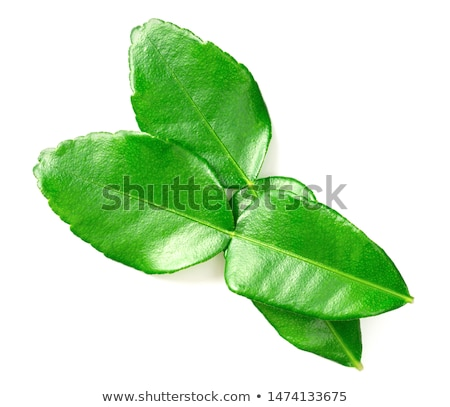 Kaffir Lime Leaf Herb Stock photo © marilyna