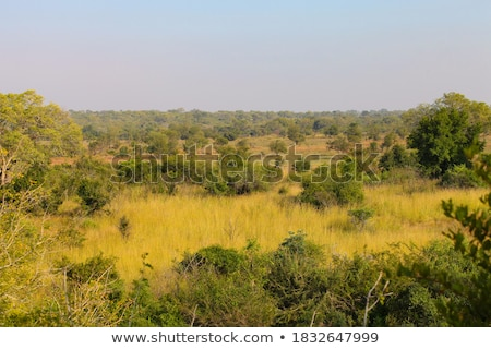 Grassland African savannah Stock photo © forgiss