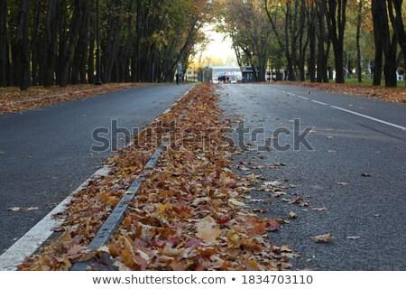 Couvrir laisse automne parc forêt Photo stock © tannjuska