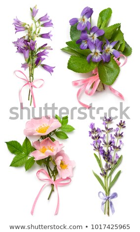lavender herb and viola flowers stock photo © marilyna