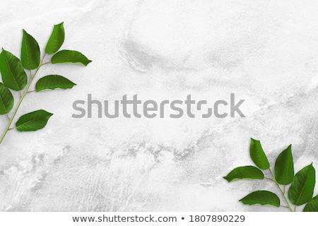 Növény zöld szalag levelek Stock fotó © AlessandroZocc