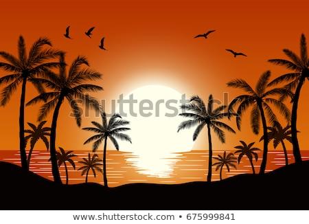 marina · agua · Maldivas · puesta · de · sol · hermosa · isla - foto stock © mikko