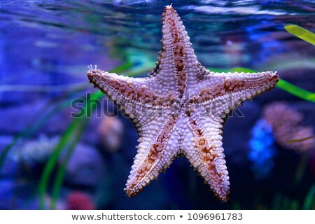 Morza star akwarium poniżej ryb charakter Zdjęcia stock © Arrxxx