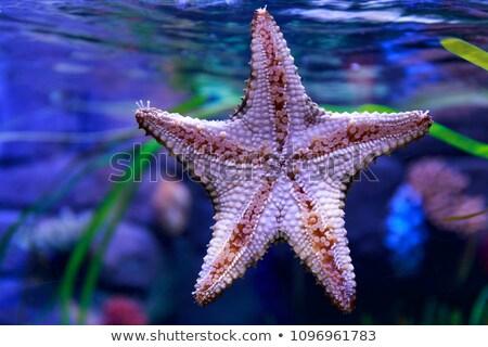 mar · estrela · aquário · abaixo · peixe · natureza - foto stock © Arrxxx