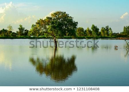 Wietnam · krajobraz · domu · drzewo · wieczór - zdjęcia stock © xuanhuongho