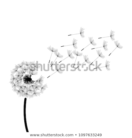 прозрачный · птиц · шаблон · весны · прозрачность · Flying - Сток-фото © grivina