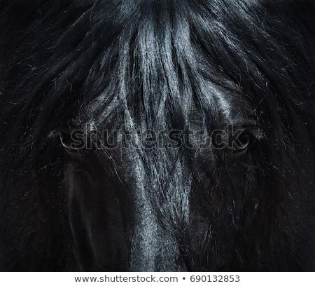 portrait of black horse close up stock photo © oleksandro