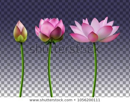 Flor tropical conjunto transparente gradiente flor Foto stock © barbaliss