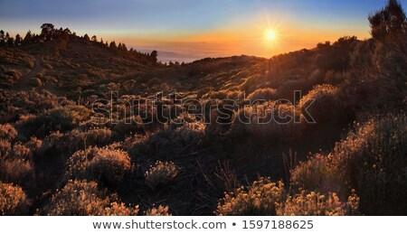 日没 公園 海 雲 国連 フィート ストックフォト © vlad_star