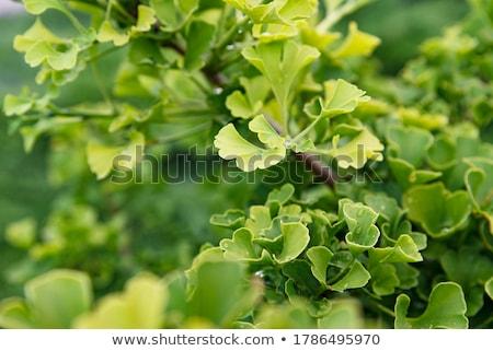 Stockfoto: Bladeren · Geel · blad · najaar · spa · plant