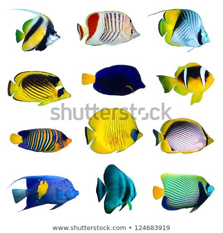 Zestaw ryb podwodne ilustracja morza tle Zdjęcia stock © colematt