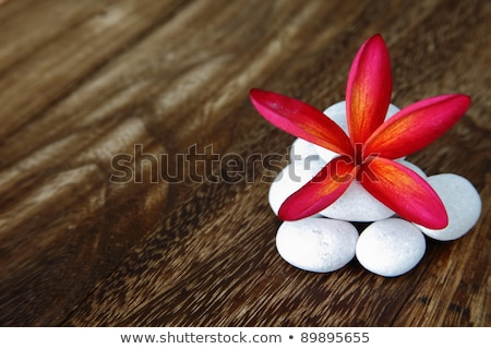 rojo · naranja · wallpaper · planta · rosa - foto stock © galitskaya