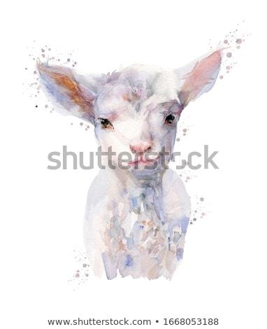 Watercolor illustration lamb Stock photo © unkreatives