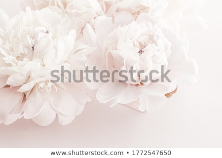 Pastel peony flowers as floral art background, botanical flatlay and luxury branding Stock photo © Anneleven
