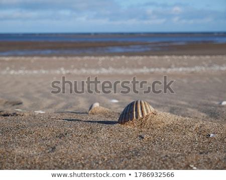 Kagylók nyár tengerparti természet utazás tengerpart Stock fotó © Anneleven