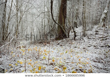 Autumnal oak leaves and pine logs Stock photo © visdia