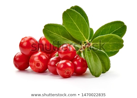 Lingonberries Stock photo © Stocksnapper