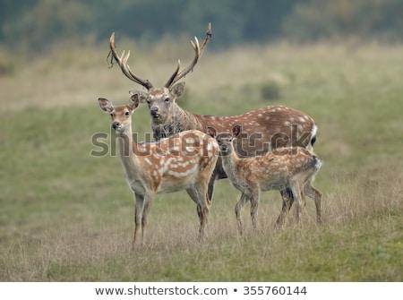 鹿 · バック · 立って · 自然 · 動物 · 男性 - ストックフォト © chris2766