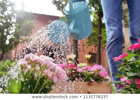 Locsolókanna kerti eszközök lila konzervdoboz zöld növény Stock fotó © zhekos