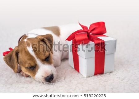 Perro regalos Cartoon Foto stock © karelin721
