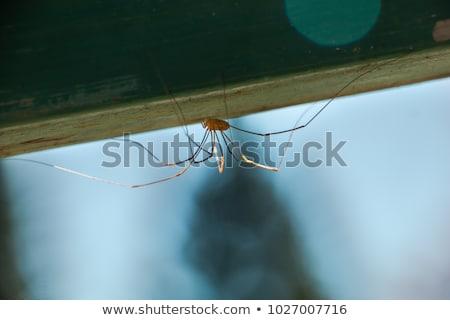 Hosszú rovar színes rajz illusztráció vektor Stock fotó © derocz