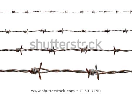 ржавые колючую проволоку мягкой стены безопасности Сток-фото © meinzahn