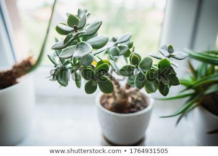 şube genç yeşil yaprak yalıtılmış beyaz Stok fotoğraf © boroda