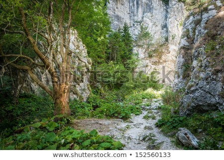 долины Словакия лет день пейзаж Сток-фото © Kayco