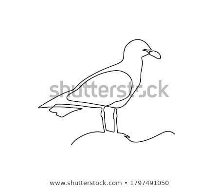 Seagull 1 Stock photo © kimmit