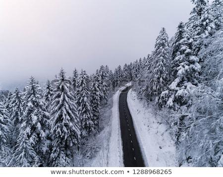 kış · yol · ahşap · orman · doğa · kar - stok fotoğraf © fesus