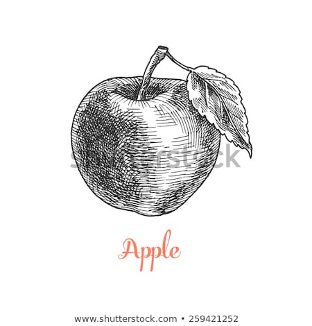 Apple in vintage style. Line art vector illustration Stock photo © ConceptCafe