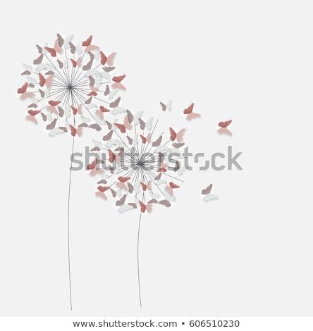 Dandelion Blowball Cutout Stock photo © Suljo