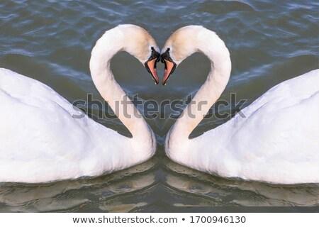Twee vorm hart liefde natuur Stockfoto © zurijeta