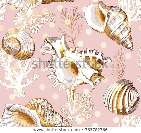 seamless pattern of seashells stock photo © blackmoon979
