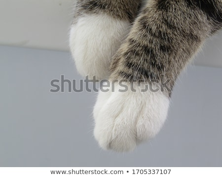 Kediler pençeleri gazete mavi Stok fotoğraf © IS2