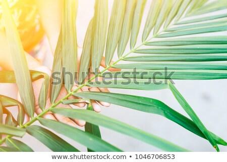 Pálmalevél feszület Biblia vallás hit Stock fotó © IS2