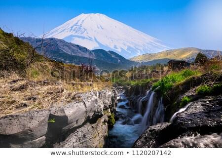 富士山 赤 梅 フォアグラウンド ツリー ストックフォト © craig