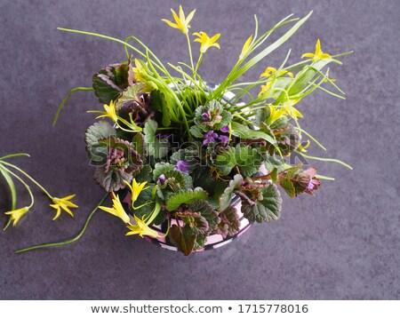 spring scene with nettle flower Stock photo © goce