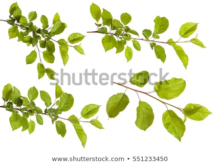 Stock photo: Apple tree leaves