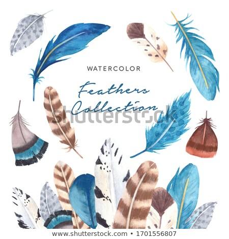 Colorful bird feathers Aquarelle template for frame or border. Stock photo © Margolana