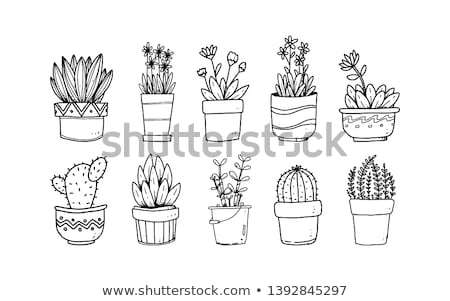 Hand-drawn potted plants collection - set of vector elements Stock photo © Decorwithme
