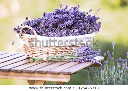свежие · лаванды · цветы · границе · мало · ароматический - Сток-фото © anna_om
